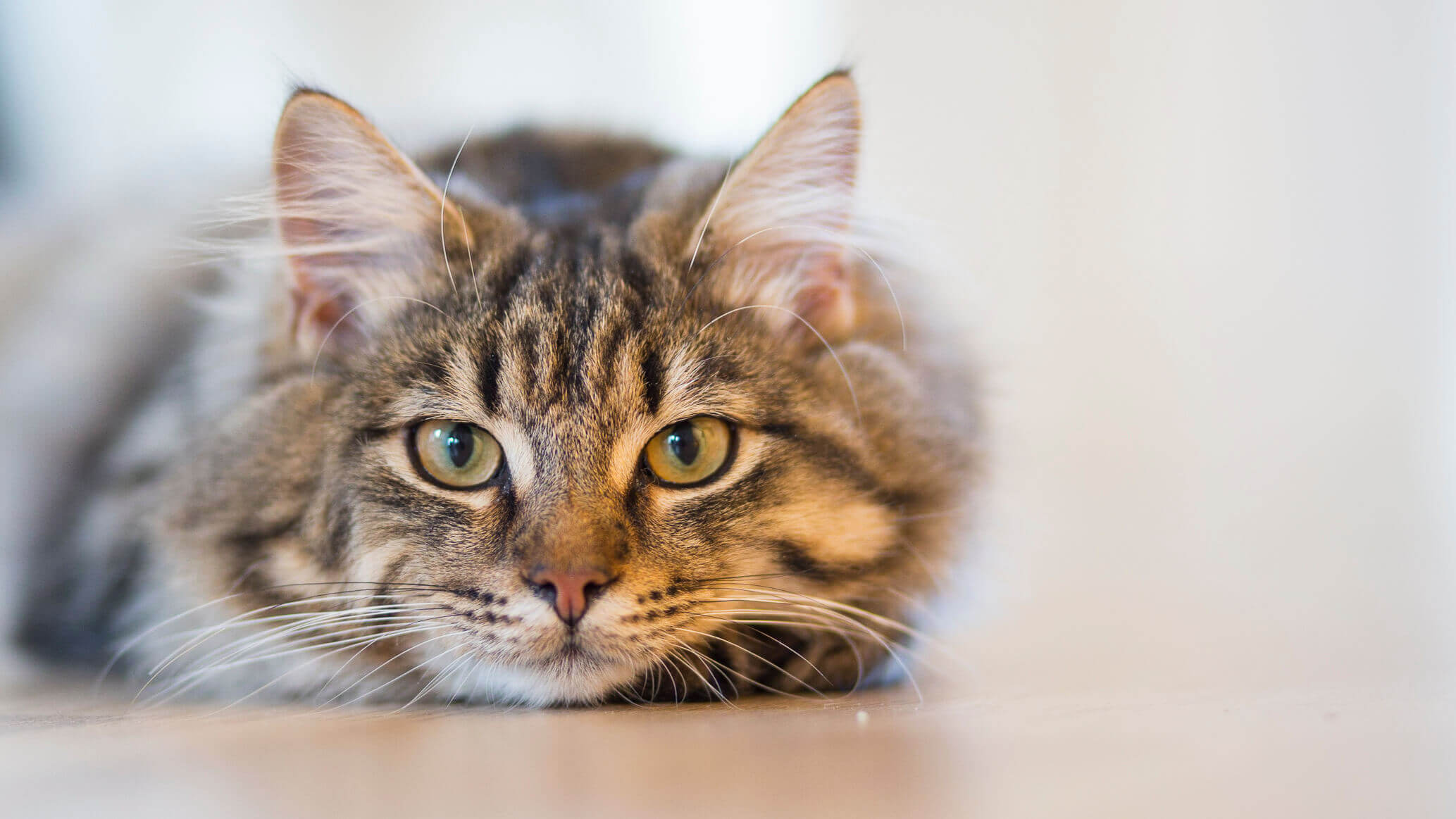 4 Types Of Cat Cancer And Their Common Symptoms