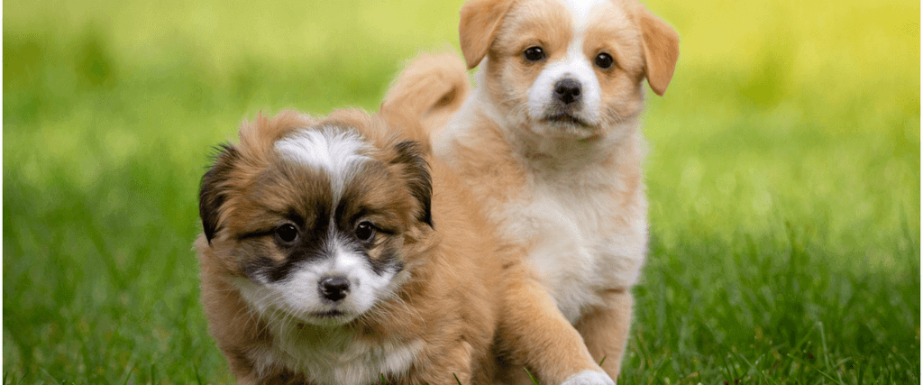 How To Socialize A Dog With A New Puppy
